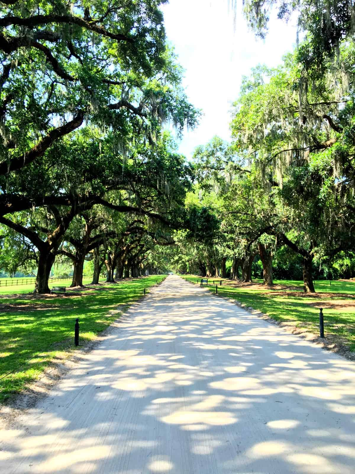 Avenue of Oaks Charleston